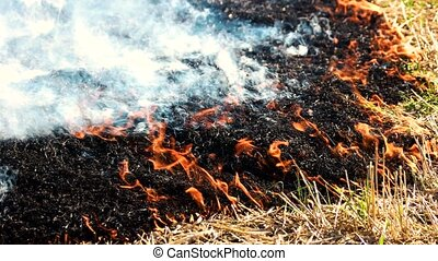 Fire smoldering and spreading. Close up. Black burnt grass.