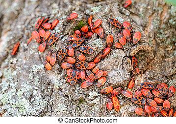 Firebug on a Tree Trunk