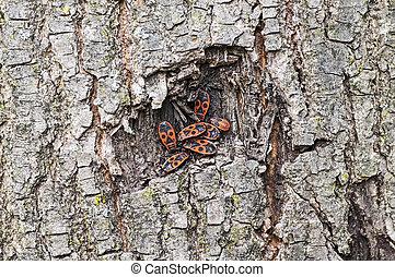 Firebugs on a tree