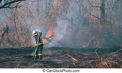 Firefighter in Equipment Extinguish a Forest Fire with a Fire Hose. A firefighter puts out large scale wood fire using a water hose. Wild forest during dry season. Spring day. Smoke rise over a flame.