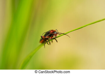 Firefly on grass thread