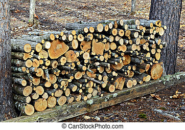 Firewood Cut and Stacked - Firewood that was cut and stacked...