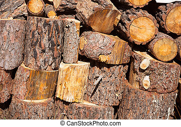 firewood of pine tree stacked in a row