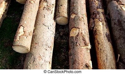 Firewood - Sawn trees of the wood stacked in a meadow