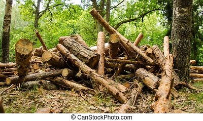 Firewood trees destruction. Forest in the interim of time. Firewood. Time Lapse. 11.