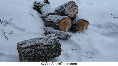 firewood winter landscape - firewood winter landscape,...