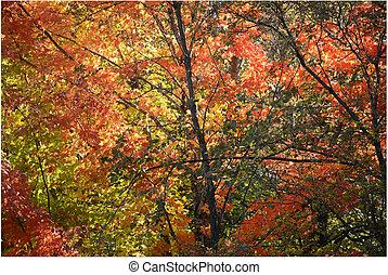firey, follaje de otoño