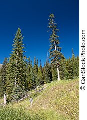 Firs and a meadow against an incredibly blue sky at Lake Louise