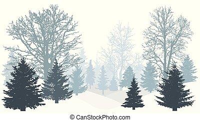(firs))., silhouette, nevoso, vettore, senza, foglie, alberi natale, inverno, foresta, (tree