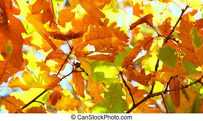 Beautiful autumn leaves in the hot sun.