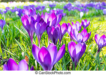 First beautiful spring flowers in the park