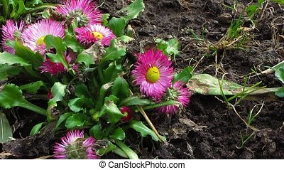 first flowers, springtime