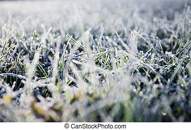First morning dew froze on a green grassy lawn and turned it into a white veil in the rays of sunlight. Nature background