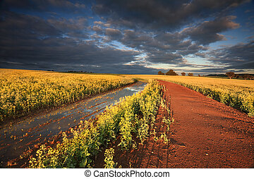 First rays of light across Canola Fields Australia