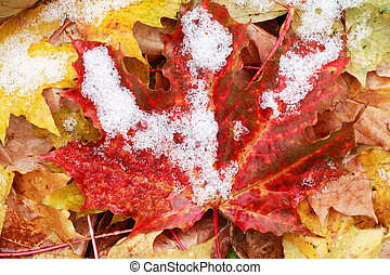 Between fall and winter. First snow on background with various fall leaves