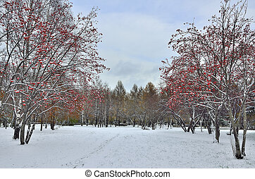 First snow in a city park.
