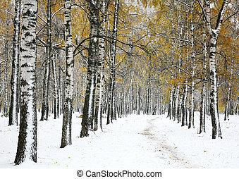 First snow in autumn park