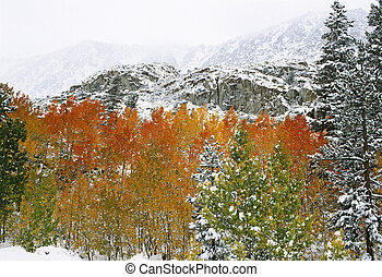 aspens covered in first snow of the season