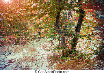 First snow in the autumn forest.