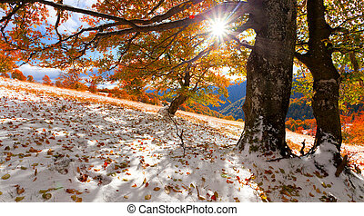First snow in the autumn forest