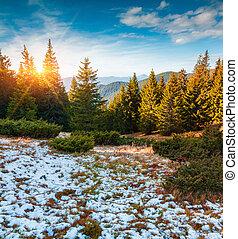First snow in the Carpathian mountain forest. Gorgany ridge, Ukraine, Europe.