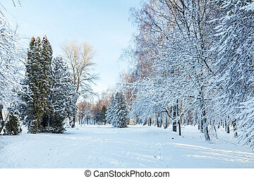 First snow in the city park with trees under fresh snow at...