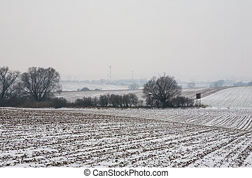 First snow on the corn field