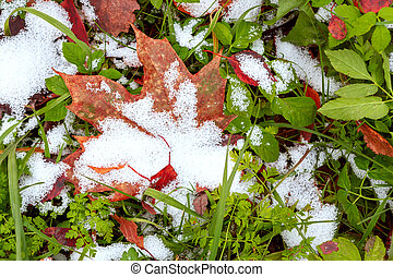 First snow on the green grass and fallen leaves in autumn. Symbol of the coming winter. Natural background texture