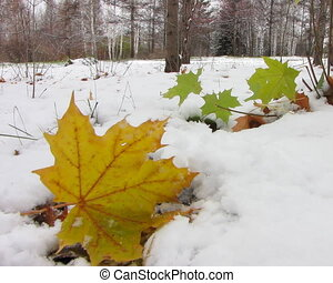First snowfall. - Leaf under first snow.