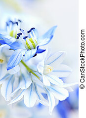 First spring flowers - Floral background of first spring ...