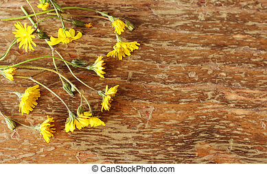 first spring flowers on wooden background