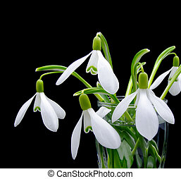 First spring flowers snowdrops bouquet in the glass