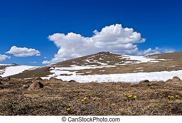 First Spring Yellow Flowers in Alpine Meadows, Snow and Clouds.