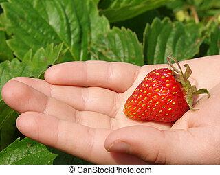 first strawberry 1