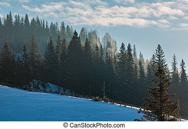 First sun rays on fir tree tops on sunrise winter mountain slope.