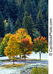 First winter snow and autumn colorful trees near mountain...