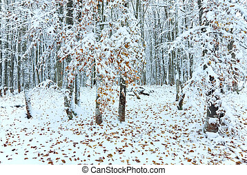 First winter snow and last autumn leafs in forest - October...