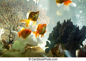 Welt fische salzwasser aquarium bunte bunte collage for Salzwasser aquarium fische