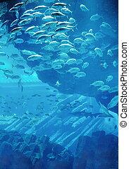 fische, aquarium, riff