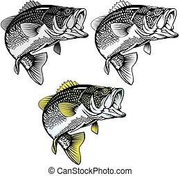 fische, baß, freigestellt
