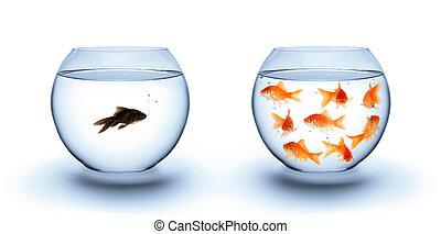 fische, begriff, -diversity, einsamkeit