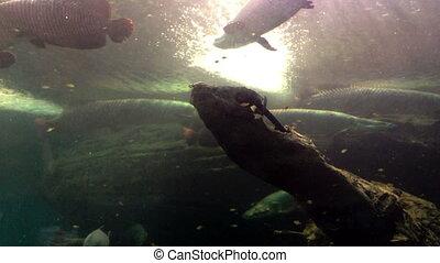 fische, gruppe, meer, unter