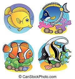 fische, koralle, verschieden