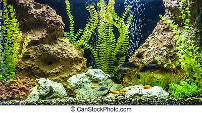 fische s wasser ttropical aquarium sch ne tropische stockfotografie suche bilder. Black Bedroom Furniture Sets. Home Design Ideas