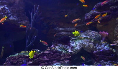 fische, und, korallen, underwater
