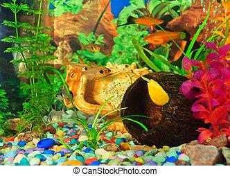 Arten bilder und stockfotos arten fotografie und for Aquarium fische arten
