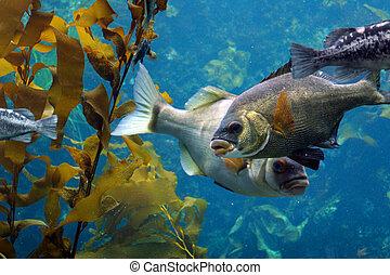 fische, wasserlandschaft