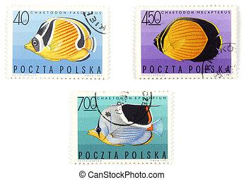 fish, állhatatos, -, topog, postai