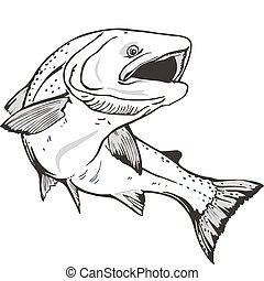 fish, σολομός