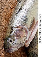 fish, クローズアップ